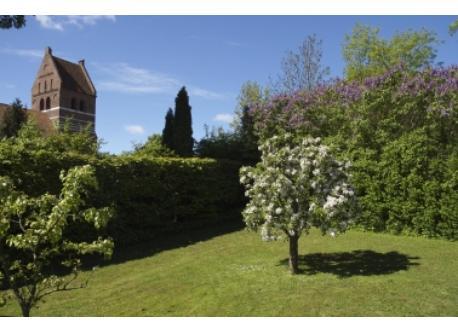 A spring photo from the garden