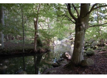 Riis Skov forest