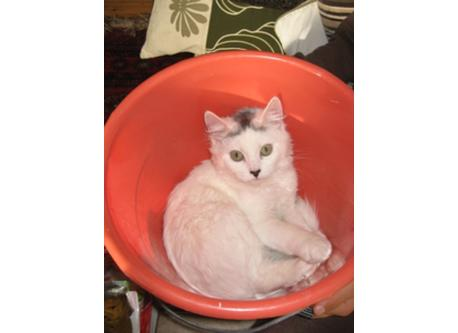 the lovely cat Sofie