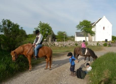 "Riding on Icelandic horses, rented at ""Hjortdal"" 9 km from our home"