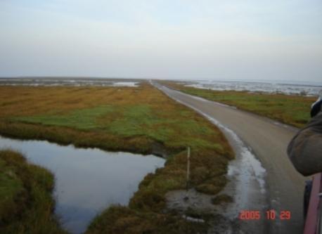 Marschland South of Esbjerg
