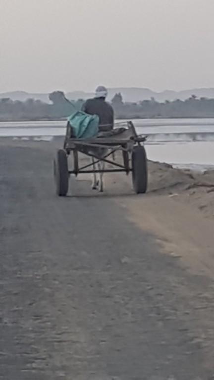 Farmer with donkey wagon