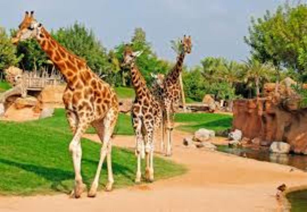 Bioparc (City's zoo)