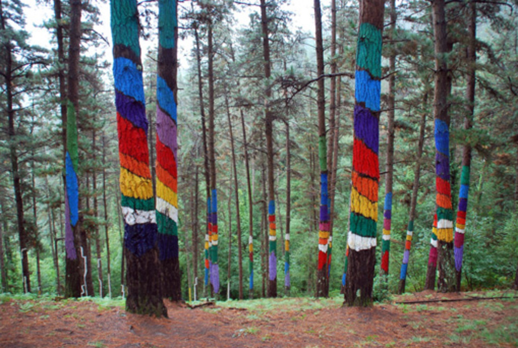 Bosque de Oma/Oma forest