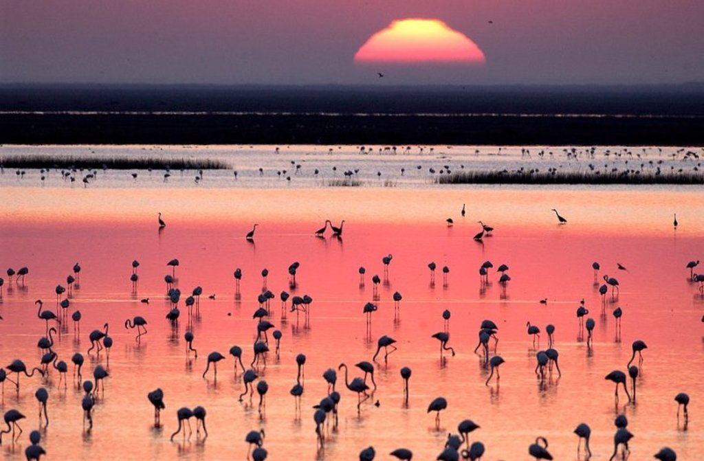 Doñana Natural Park > It offers nice and diverse birdwatching spots