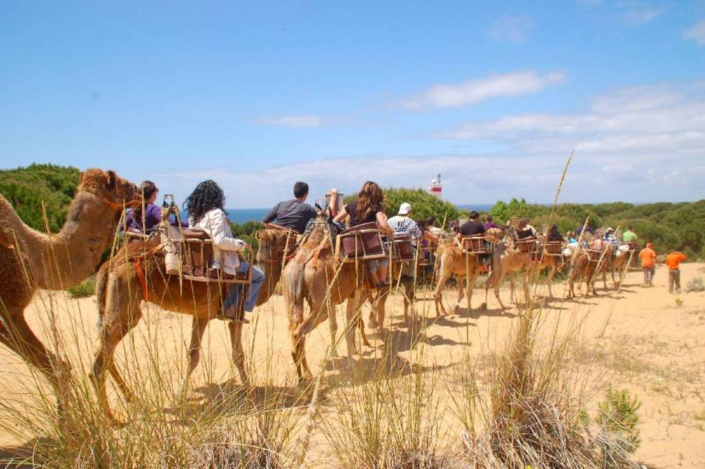 Doñana Natural Park > Outdoor activities available to visitors