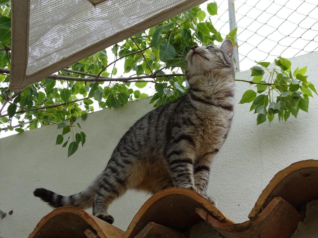UNo de nuestros 3 gatos. Luna