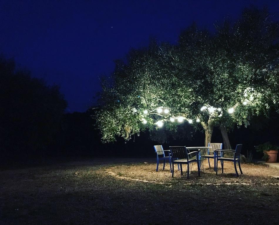 Table olive tree