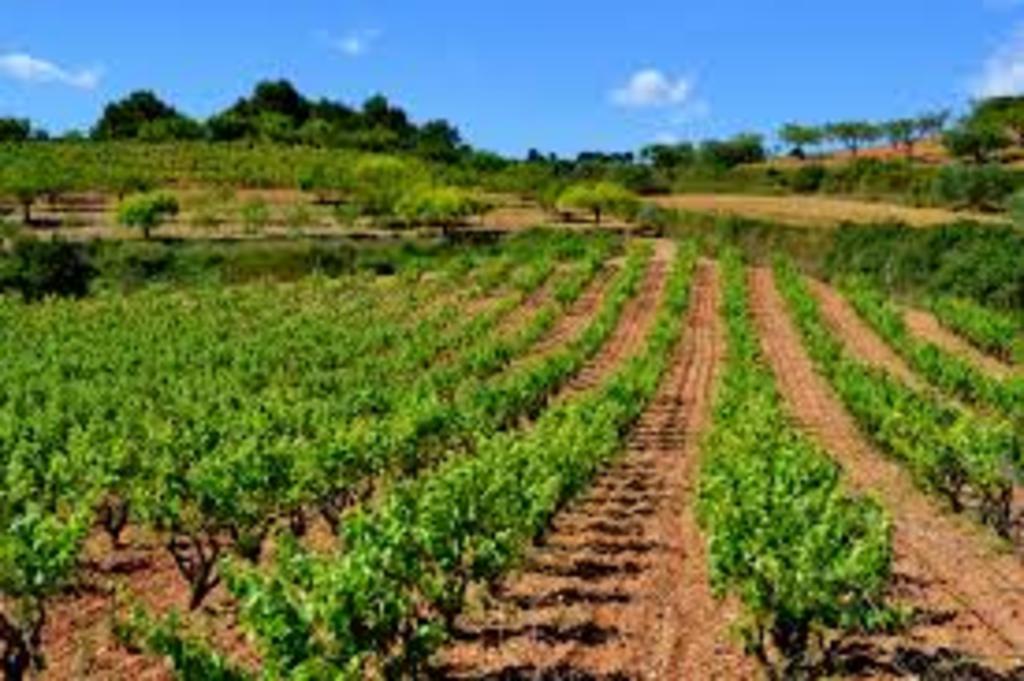 Penedès wine & cava region