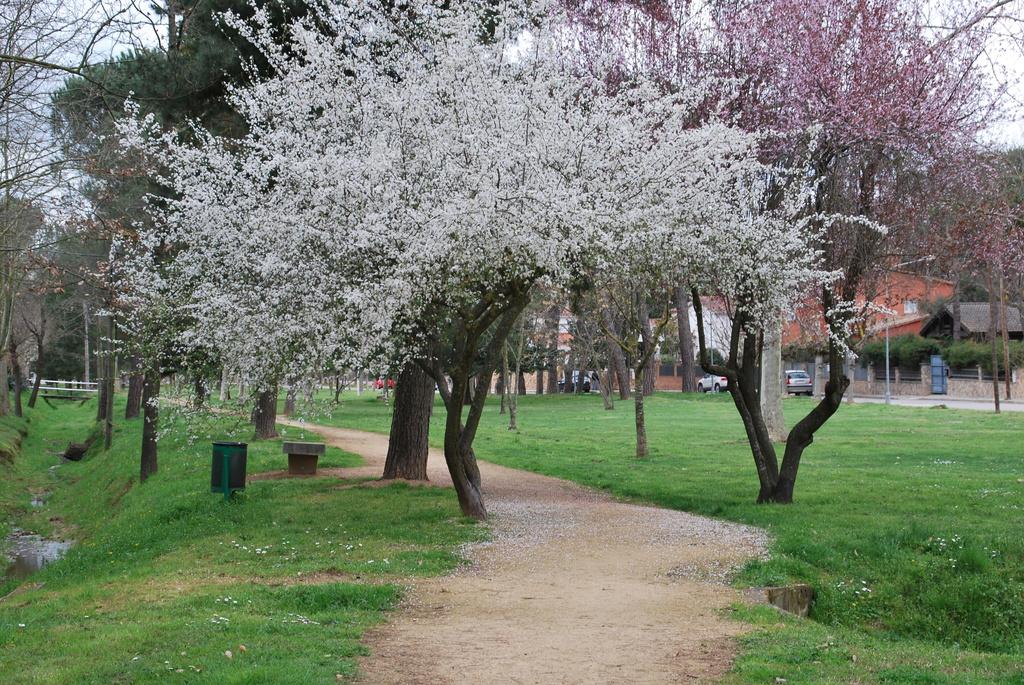 The green gardens Vidreres