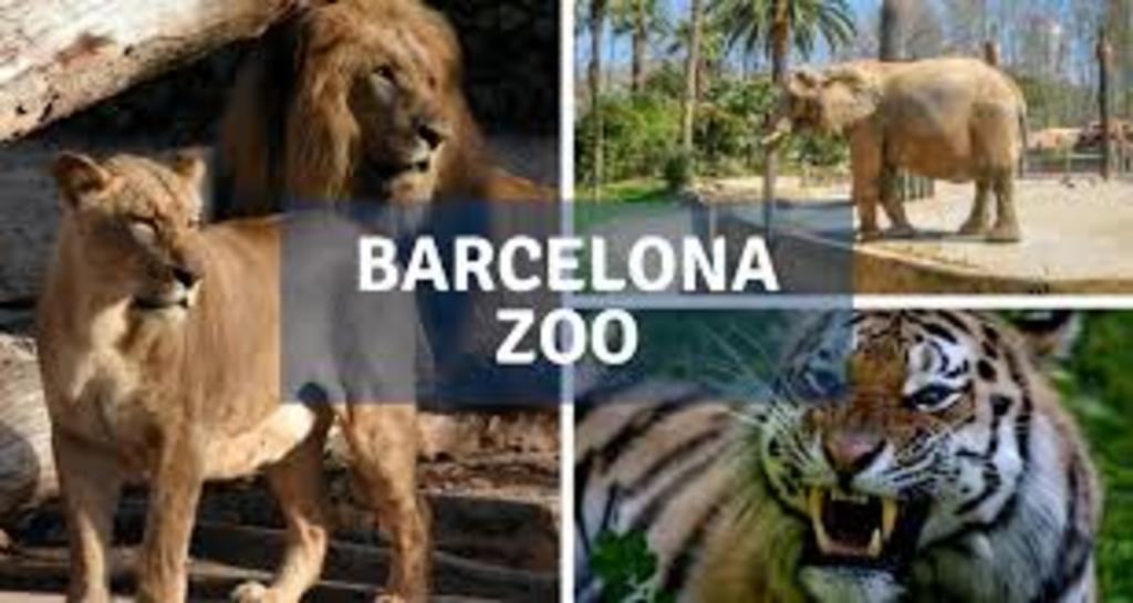 Zoo Barcelona. 20' drive.