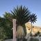 Jardín de cactus en Níjar