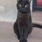 Our cat: Blauet!