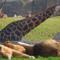 Bioparc zoo Valencia (10min. by car)