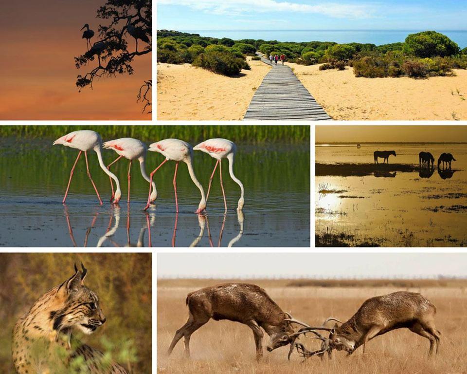 El Parque Nacional de Doñana esta a una hora de nuestra casa.