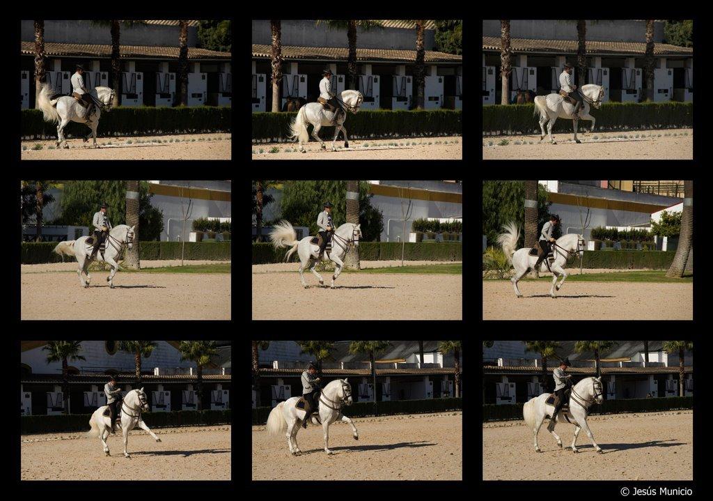 Horse Show. Jerez