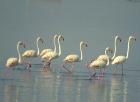 flamencos en el delta