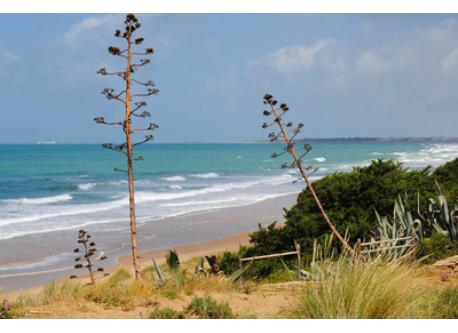 """""""La Barrosa"""" beach"""