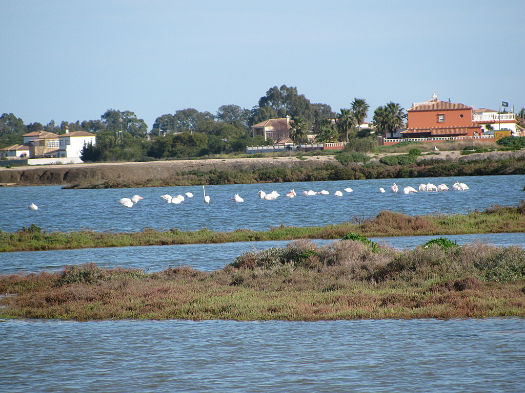 Salt marshes nearby