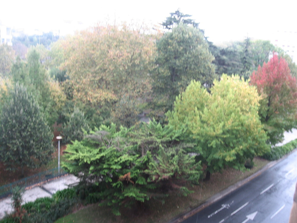 autumm view from our living room