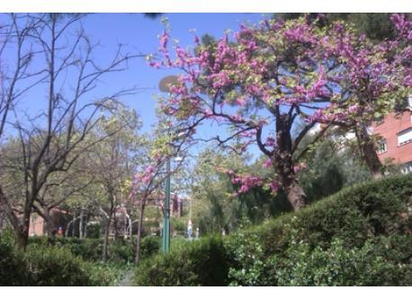 Santa Cecilia's Garden