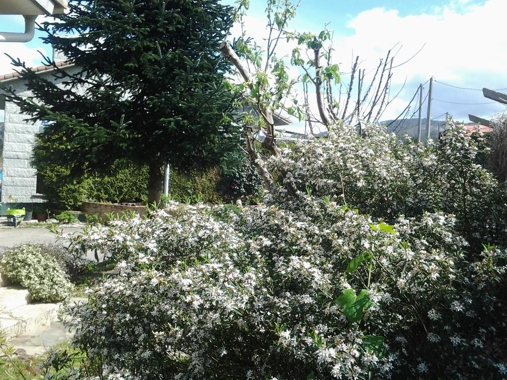 garden detale