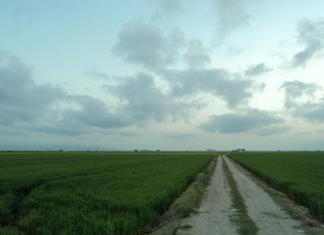 paths between rice fields (ten minuts walking from house)