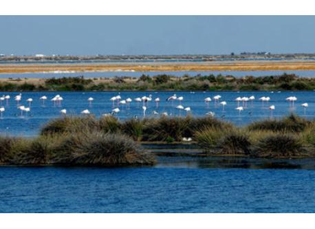 Doñana National Park (Unesco Biosphere Reserve - 50 km from our house) (MUST SEE!!!)