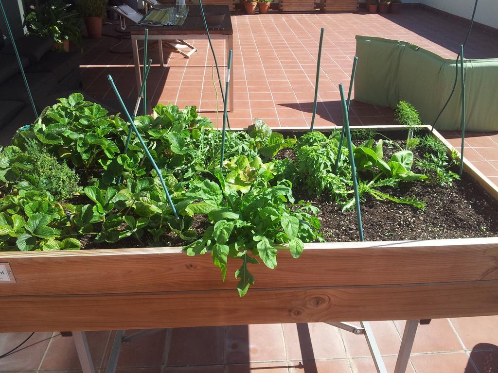 Small Kitchen Garden