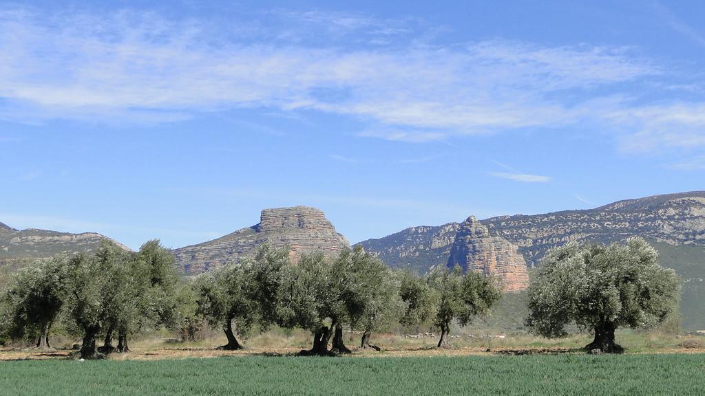 Salto de Roldán  con  olivos
