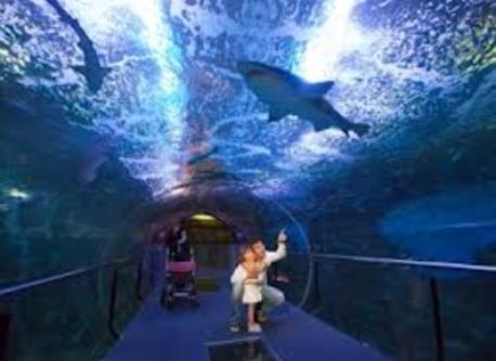 Aquarium, a 1 km de casa