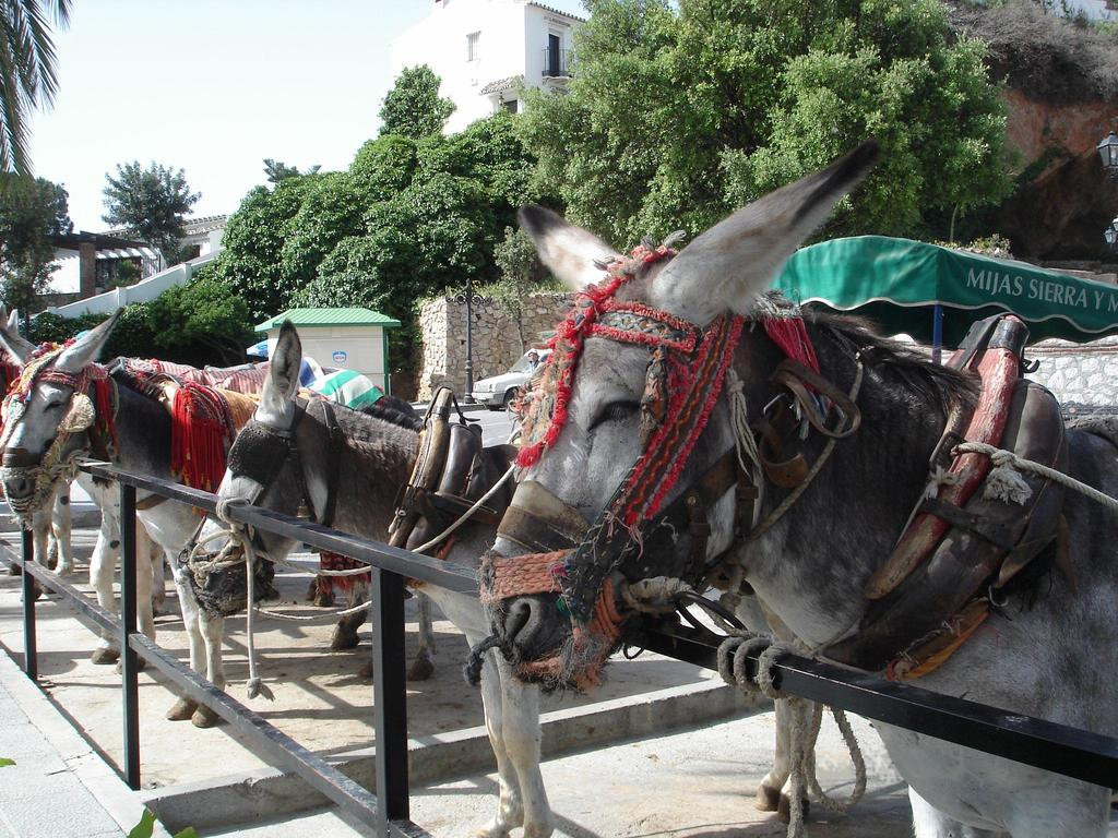 Burro-taxi at Mijas