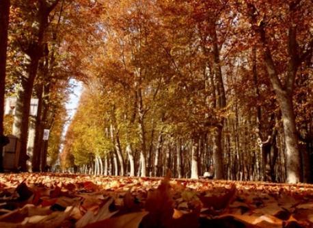 Parc urbà de la Devesa (5 min.)