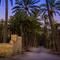 Huerto de palmeras de Elche