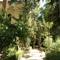 The Botanic Garden (Just Across the Street)