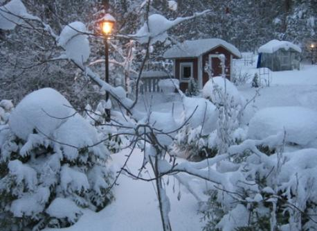 Our garden in winter