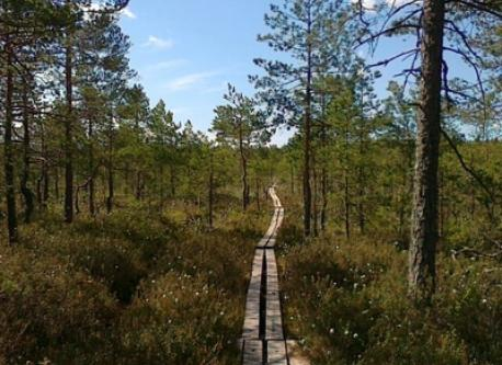 Hiking in Masku