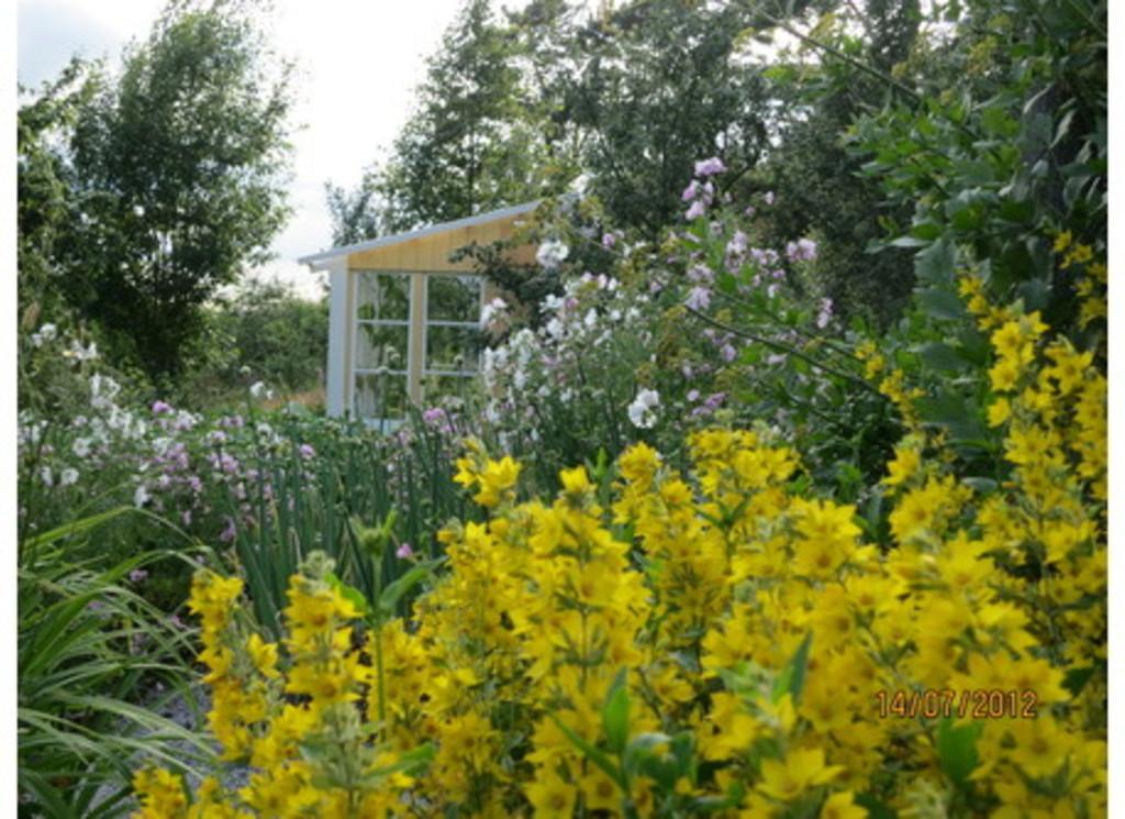 Garden in summertime