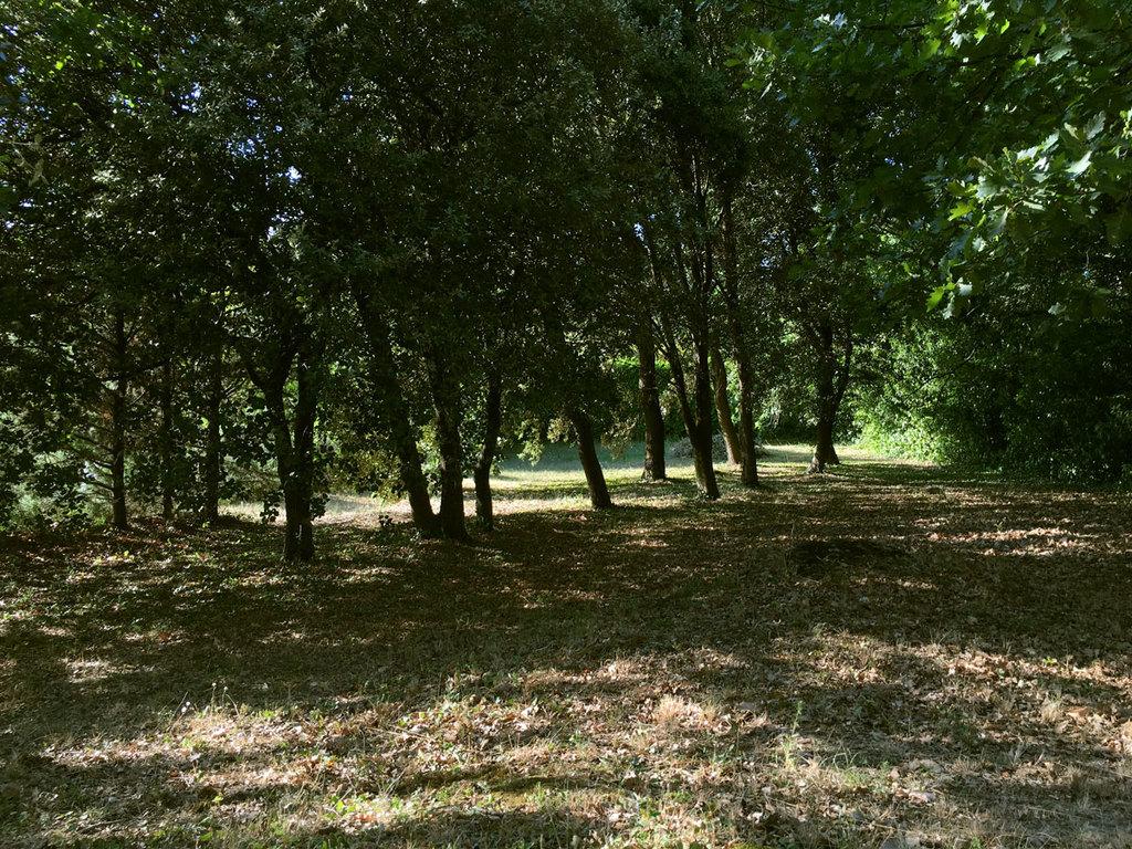 The garden/park