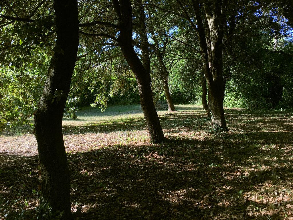 in the garden/park