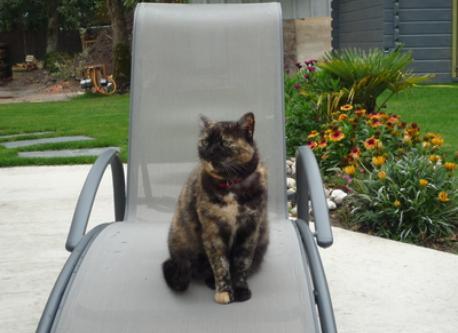 notre chat Pépita