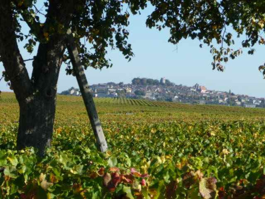 Vineyards of Sancerre.