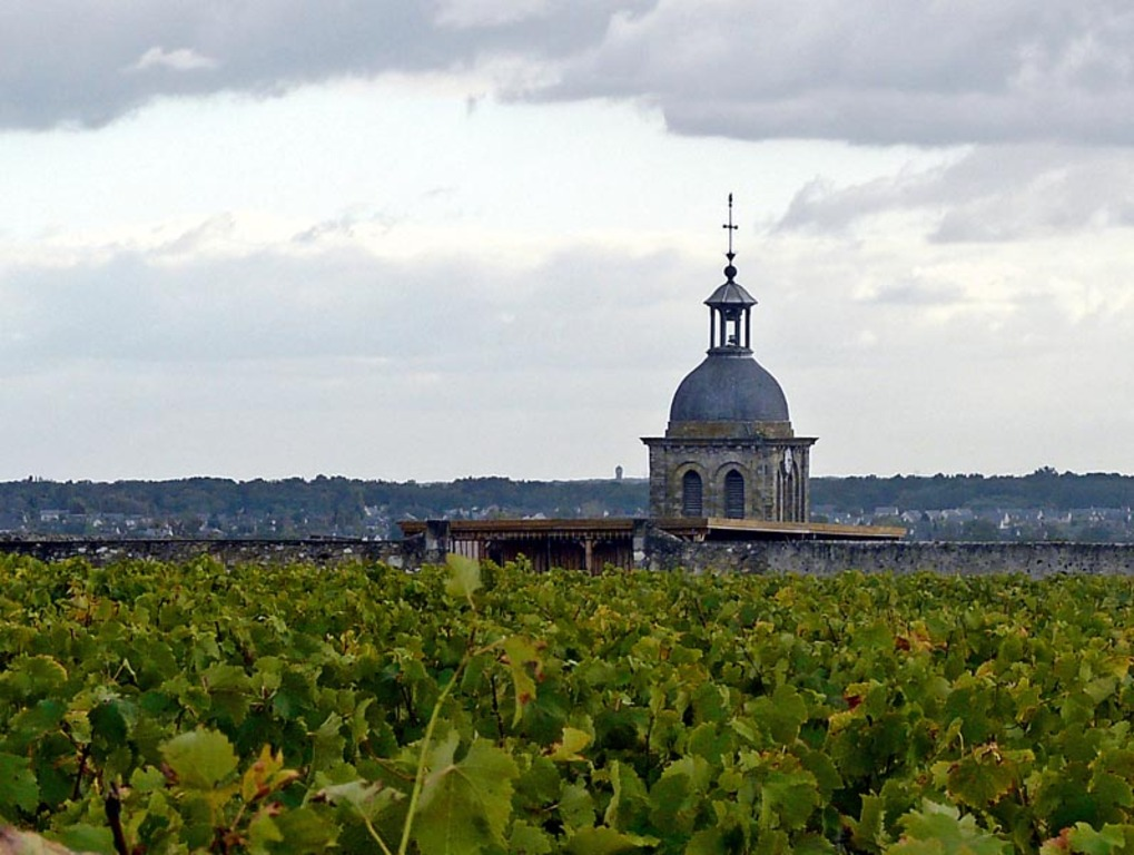 Vine Vouvray