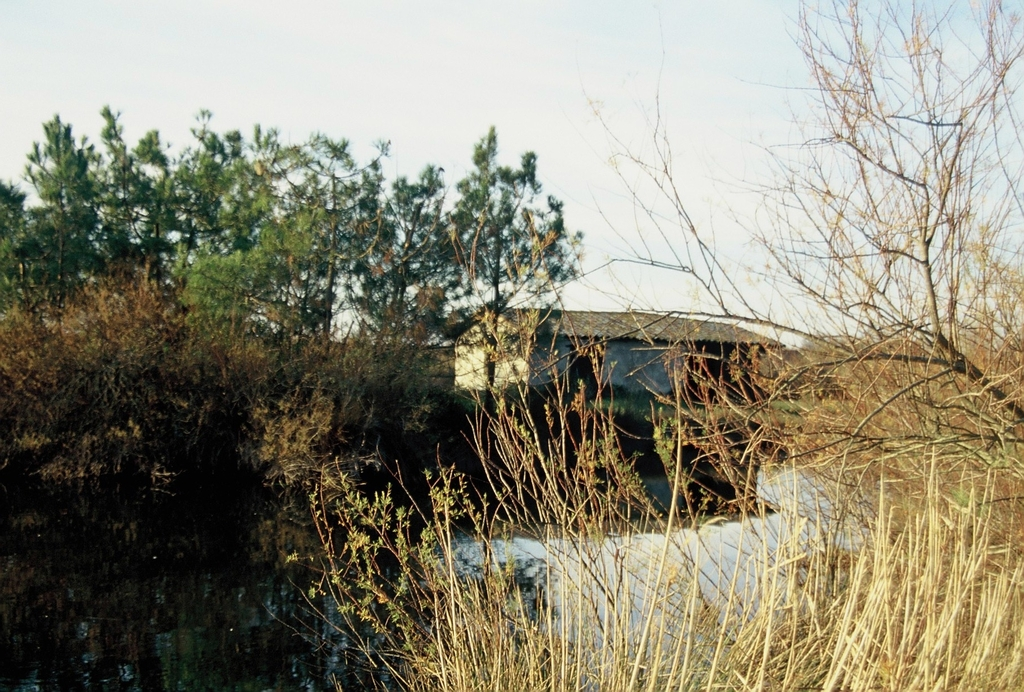 le teich-bassin d'arcachon