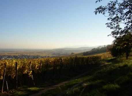 walk near Ribeauvillé