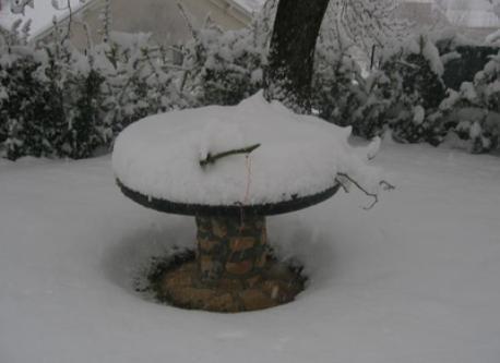 snow in our garden !