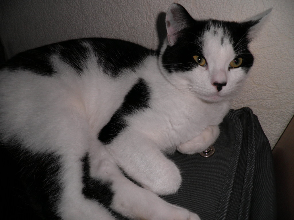 Our cat Max