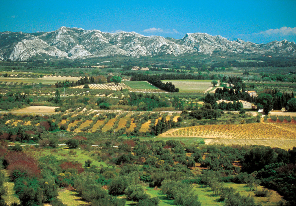 The countryside, with fields of olive trees. On the background: the Alpilles (1 hour from home)