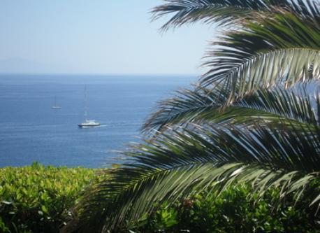 petit palmier près de la terrasse