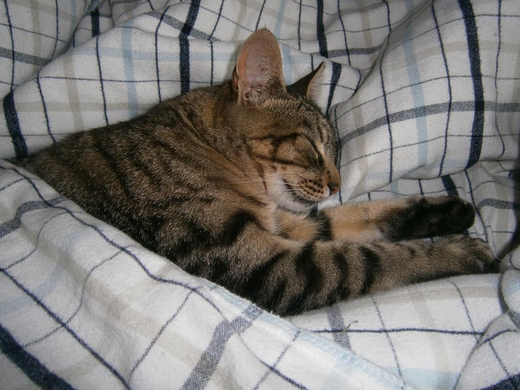 sleepy Taïga